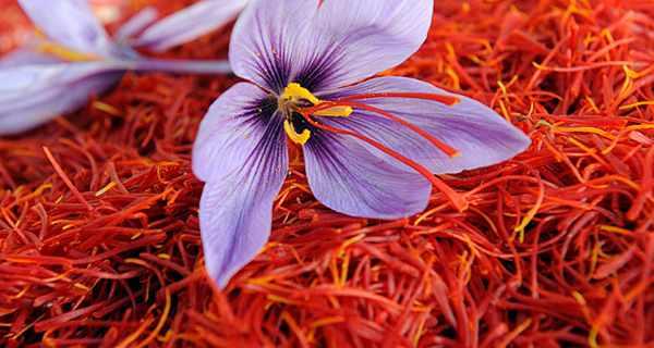 Iran Saffron