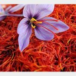 Best Saffron In the World