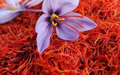 Best Saffron In the World